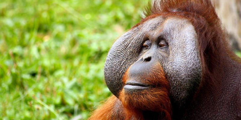 Deforestación por aceite de palma