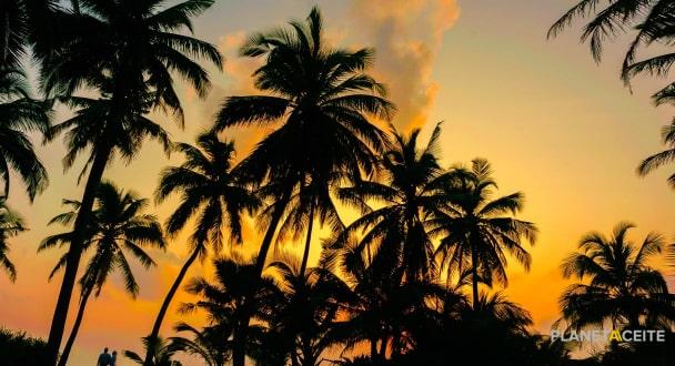 7 propiedades del aceite de palma: fácil obtención
