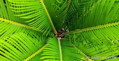 De dónde sale el aceite de palma