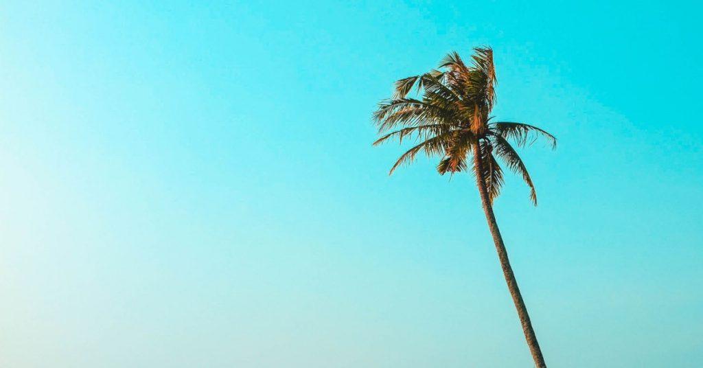 Beneficios del aceite de palma