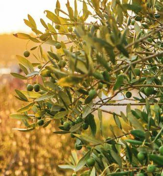 Aceite de oliva y omega-3